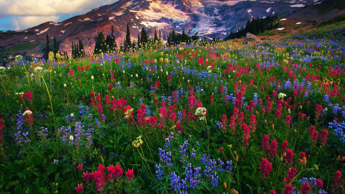 mt rainier wallpaper and background image | 1366x768 | id:435538
