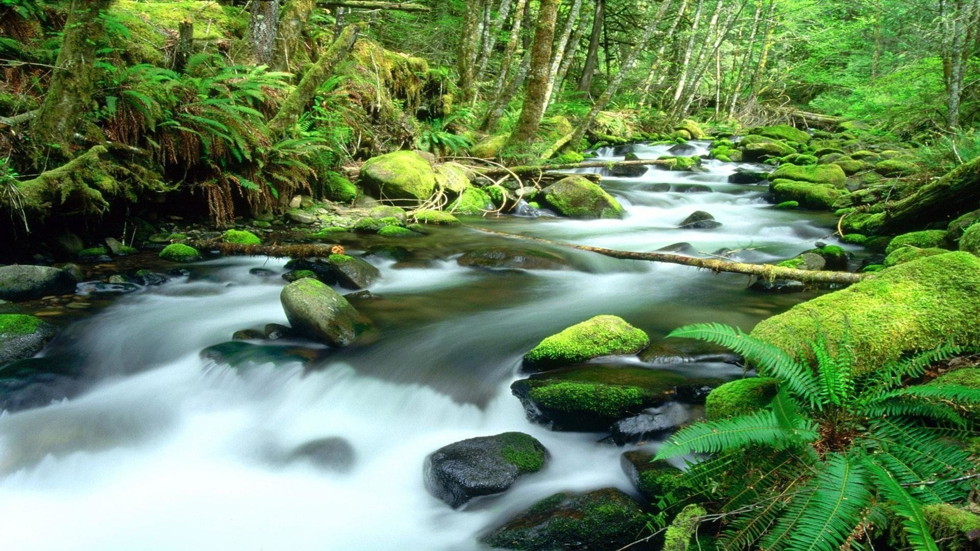 Daintree Rainforest HD Wallpaper | Background Image ...