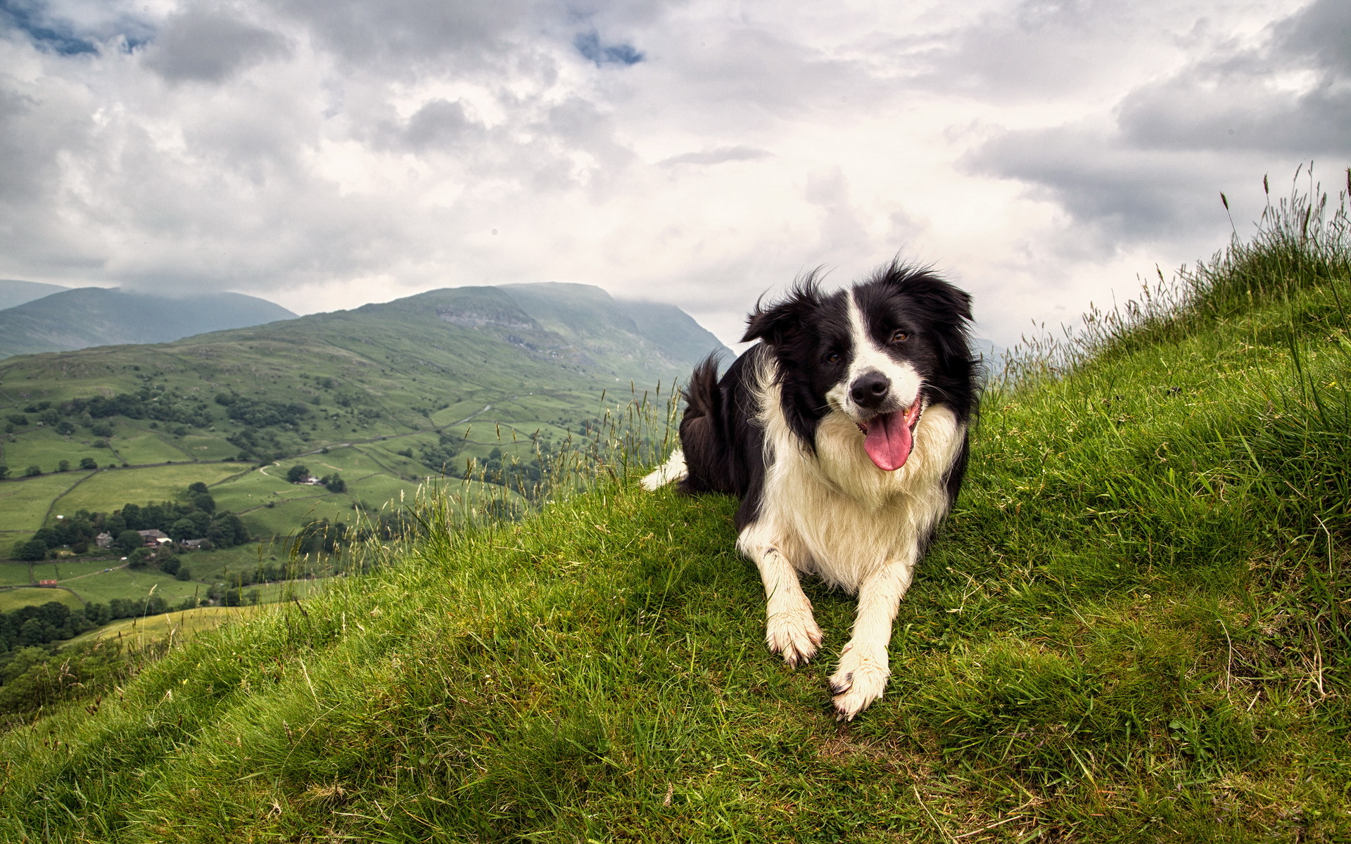 Border Collie Computer Wallpapers, Desktop Backgrounds