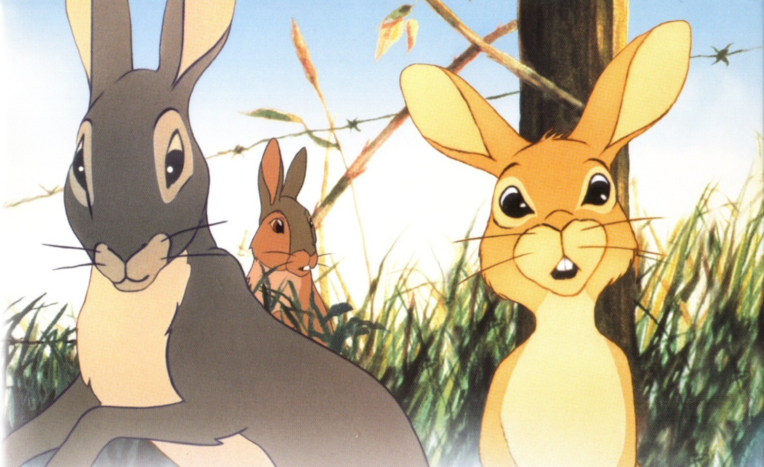 6 Watership Down Hd Wallpapers  Background Images -5086