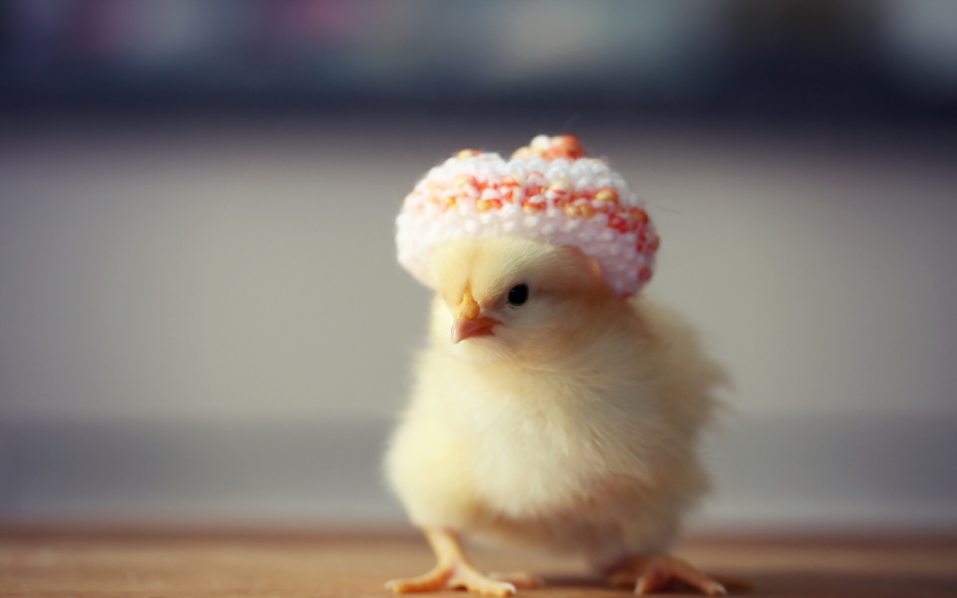 Cute Baby With Hat Wallpapers: Chicken HD Wallpaper