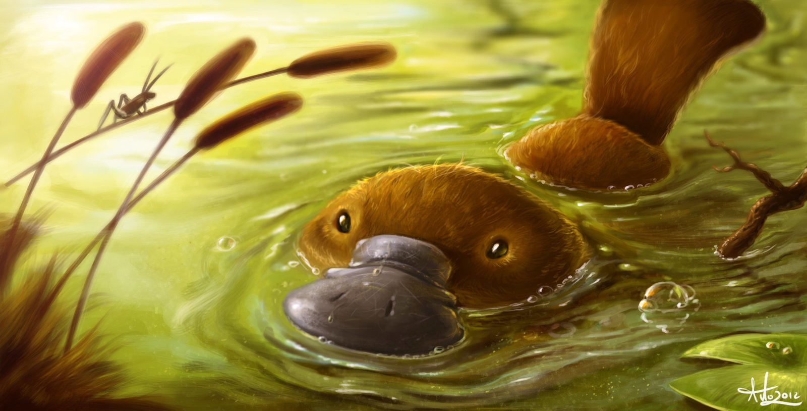 Platypus full hd wallpaper and background image 2560x1600 id wallpaper id 441639 voltagebd Images