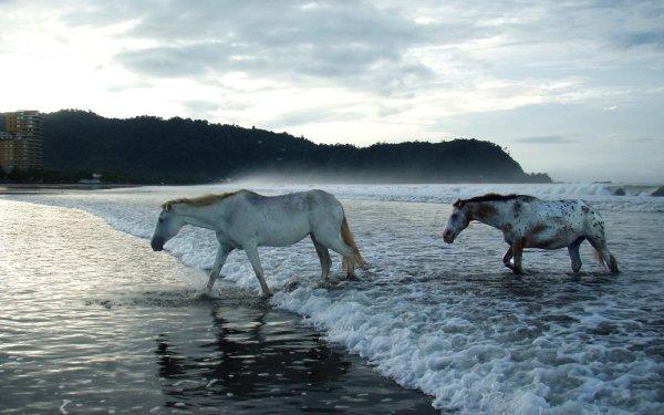 Animal Horse Shore Beach Ocean Sea City Couple HD Wallpaper | Background Image