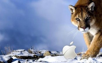 Technology - Apple Wallpapers and Backgrounds ID : 442140