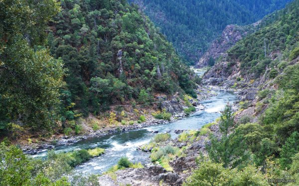 Earth River Tree Water Oregon HD Wallpaper   Background Image