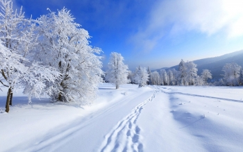Earth - Winter Wallpapers and Backgrounds ID : 446345