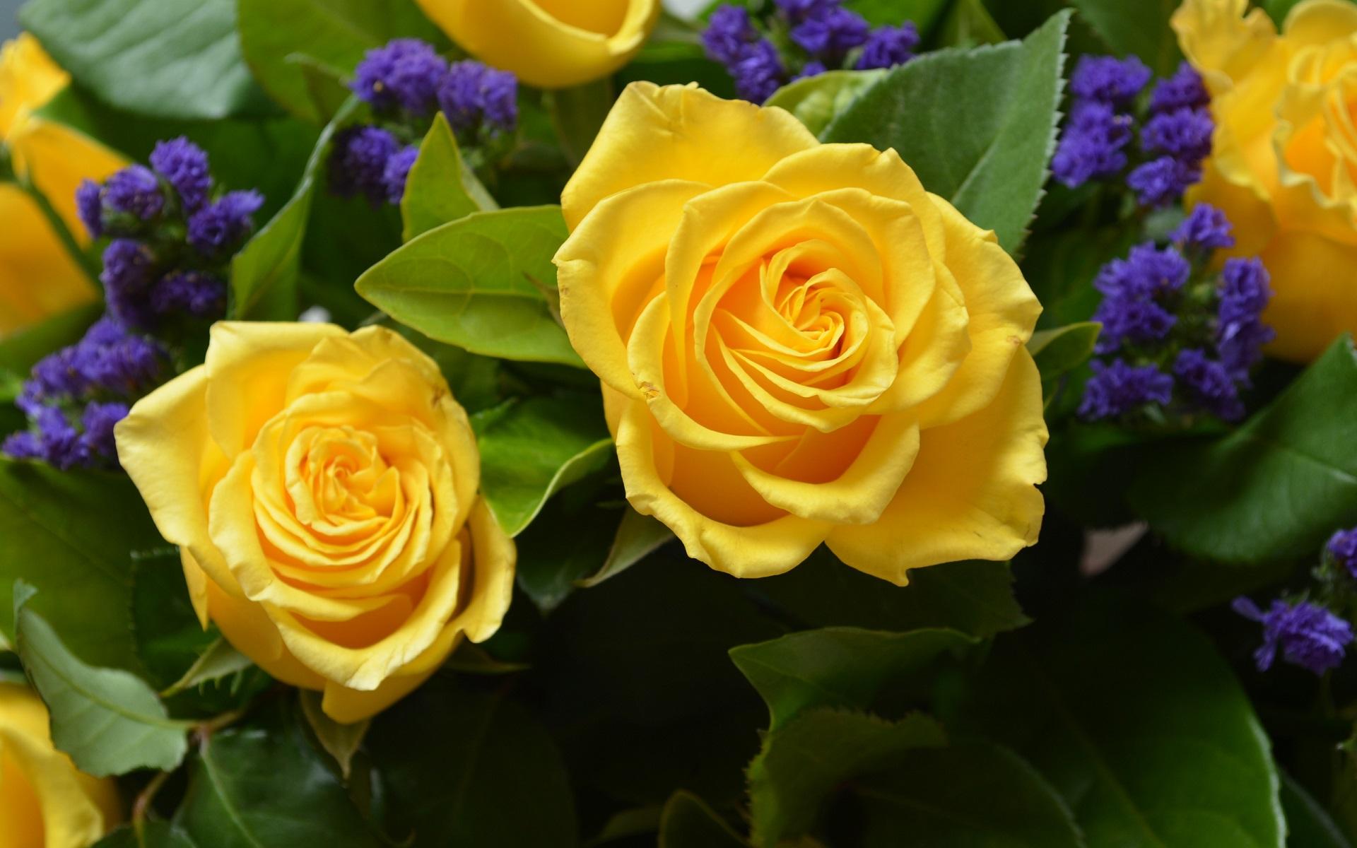 Yellow rose full hd fondo de pantalla and fondo de - Yellow rose images hd ...