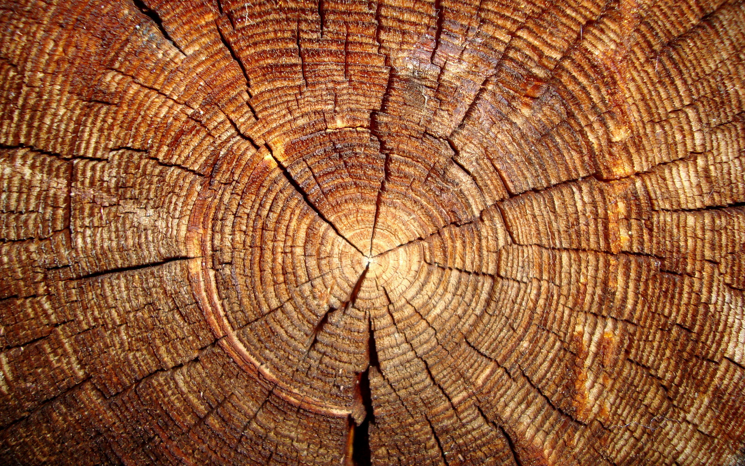 Wood hd wallpaper background image 2560x1600 id - Wallpaper holz ...