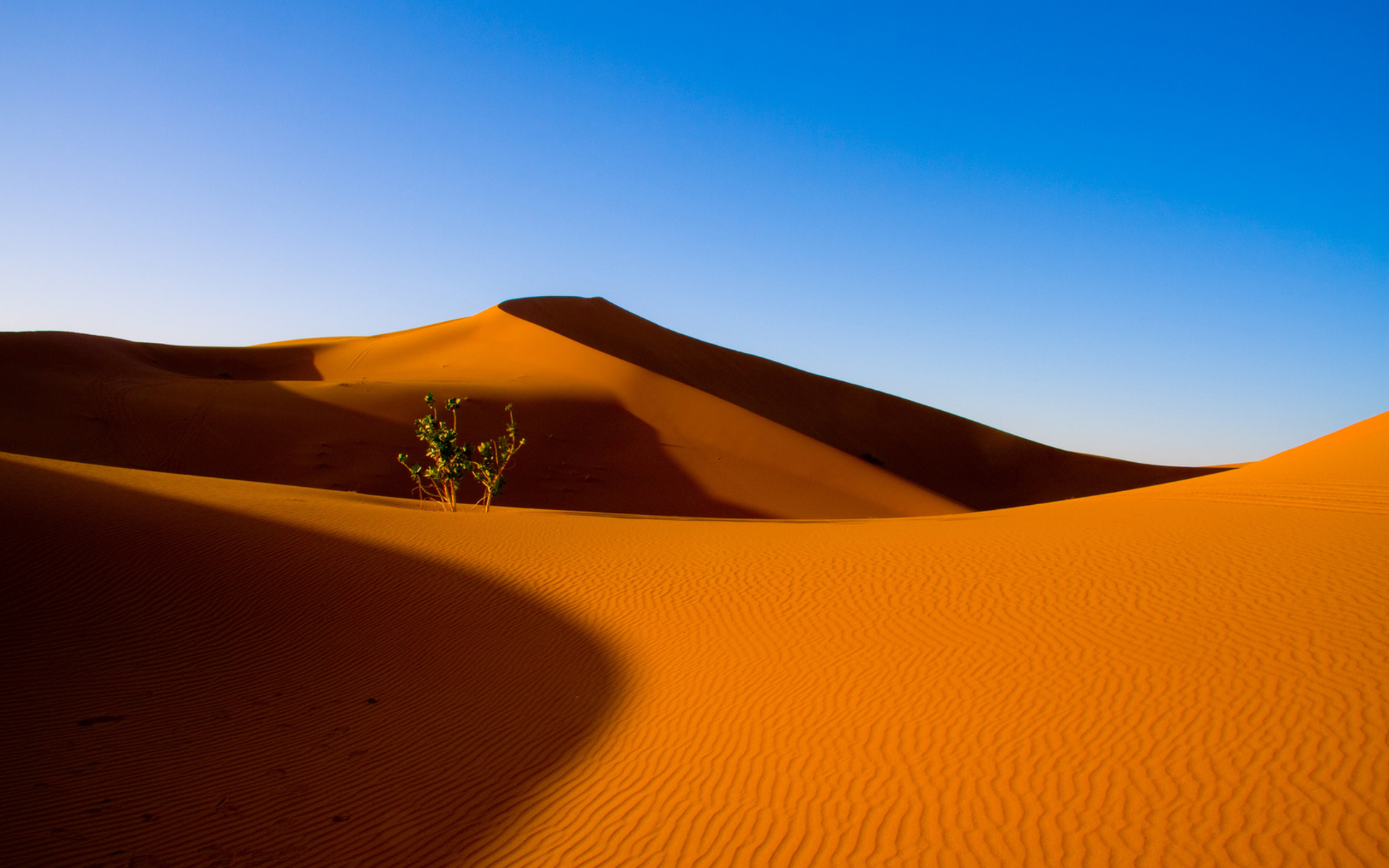 Desert Full HD Wallpaper and Background | 1920x1200 | ID ...