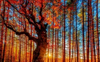 Earth - Autumn Wallpapers and Backgrounds ID : 448943