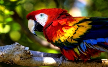 Animal - Macaw Wallpapers and Backgrounds ID : 449406