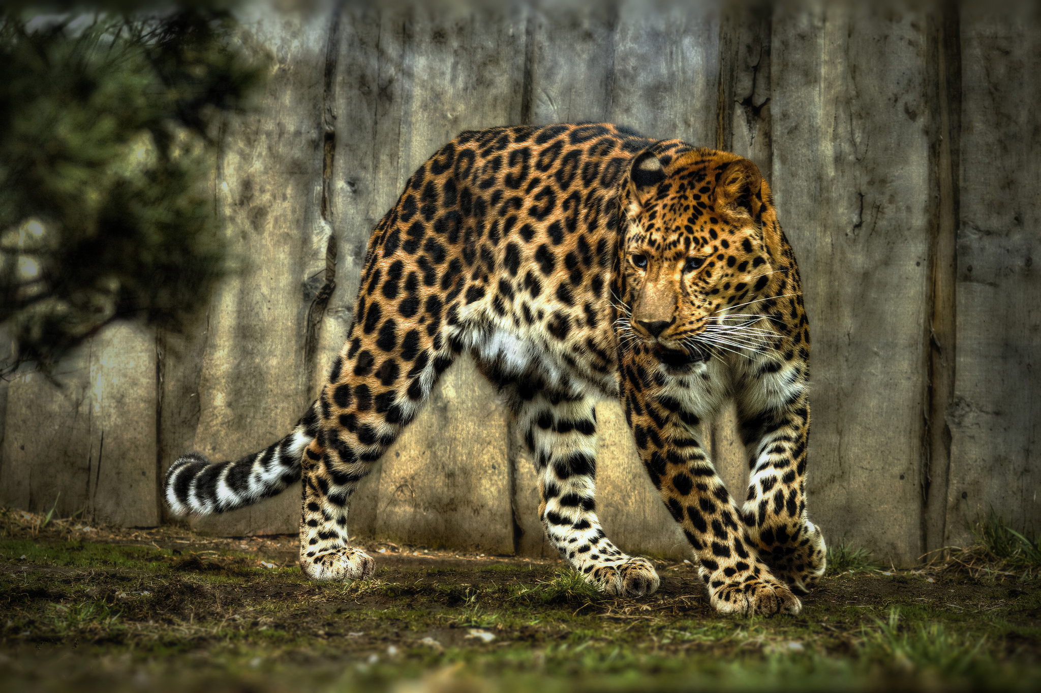 Jaguar hd wallpaper background image 2048x1364 id - Jaguar animal hd wallpapers ...