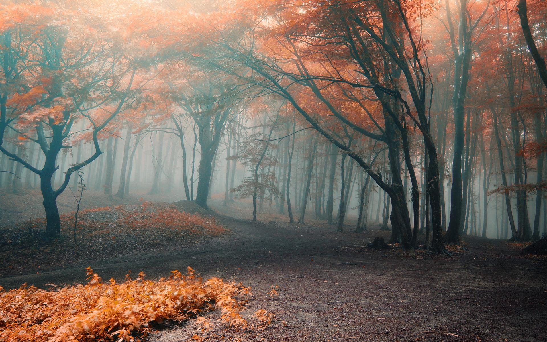 Обои misty, forest, Road. Природа foto 9