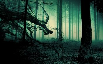 Dark - Forest Wallpapers and Backgrounds ID : 457968