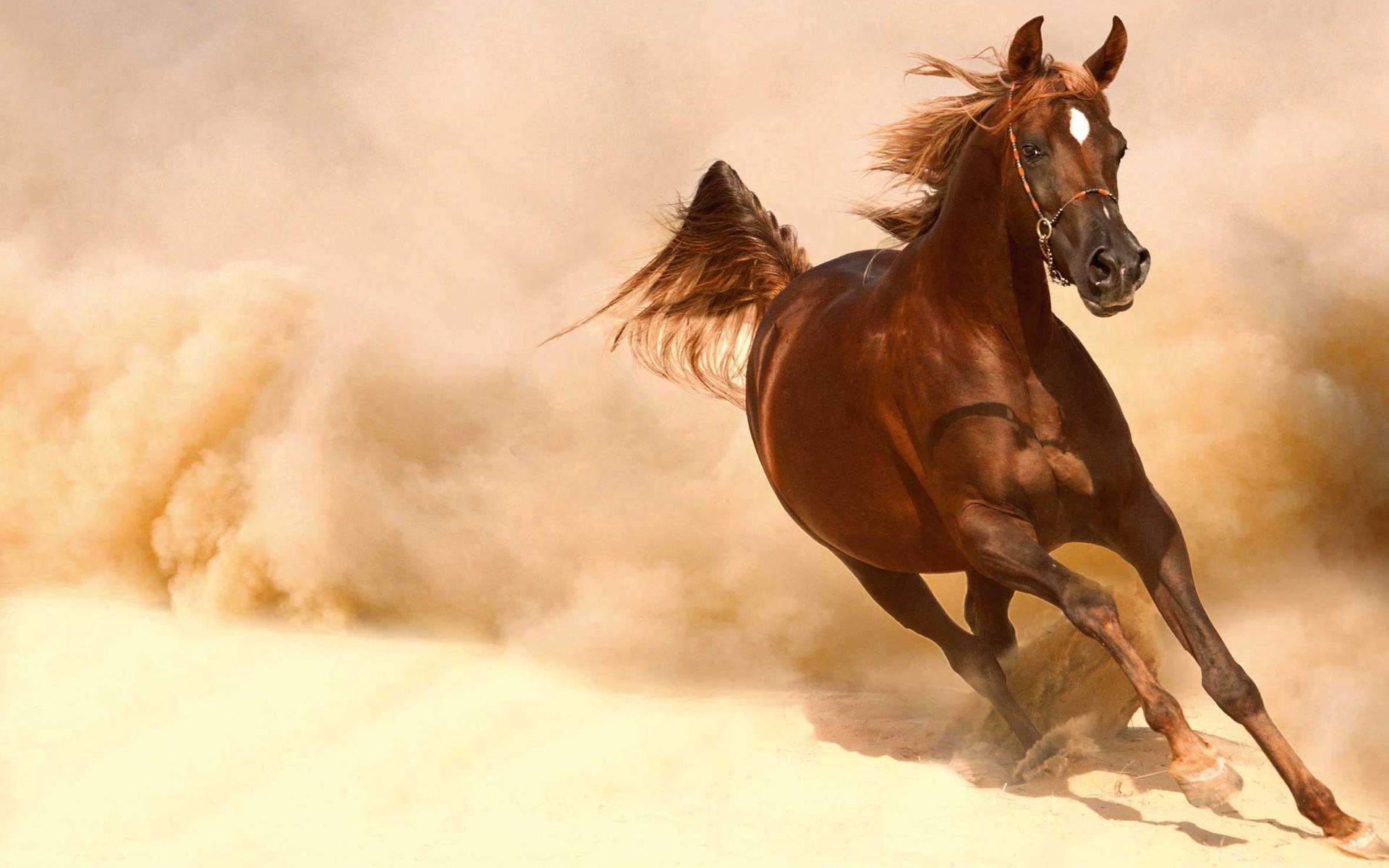 Horse HD Wallpaper