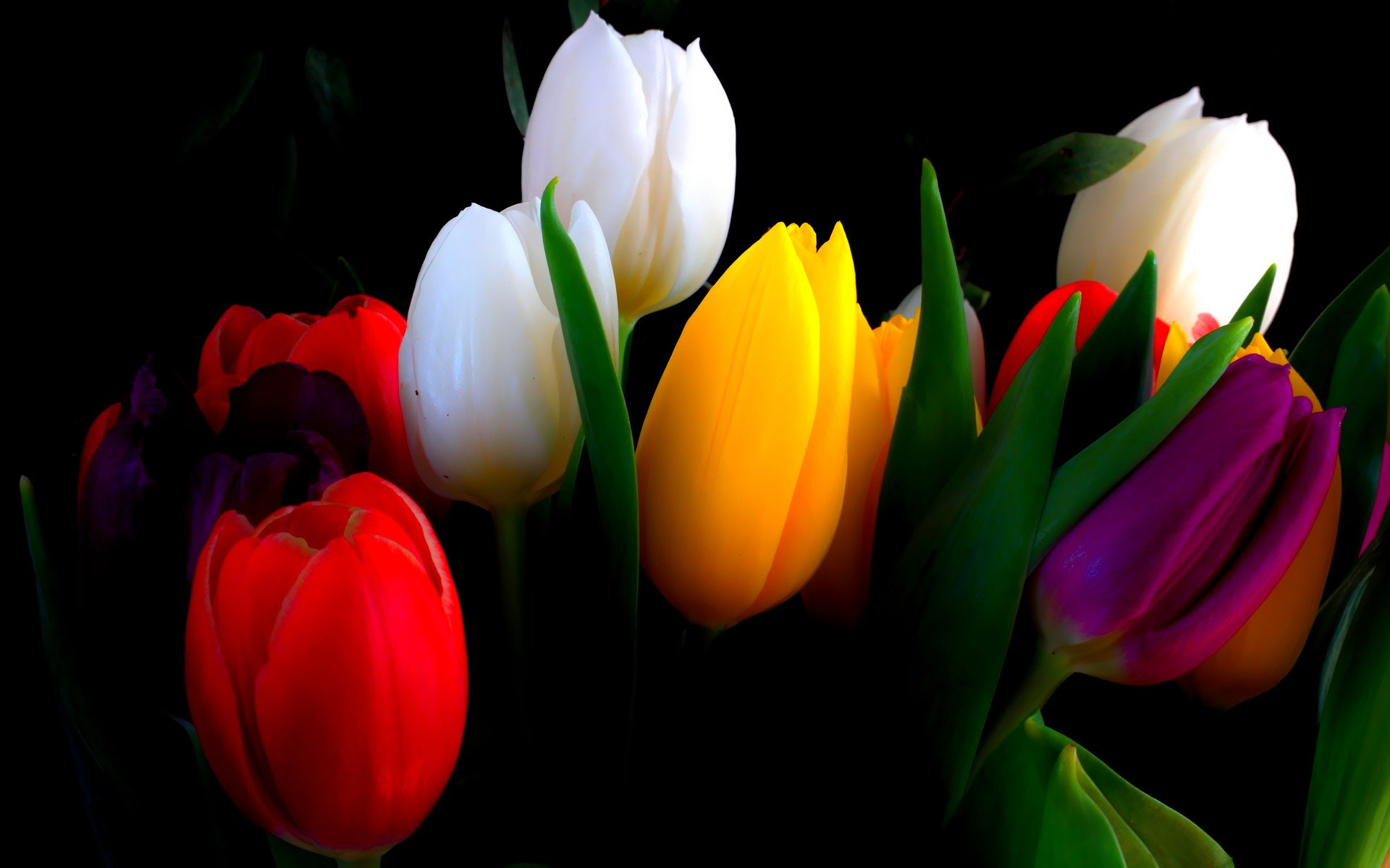 Tulip Symbolism amp the Meaning of Tulips in the Language of