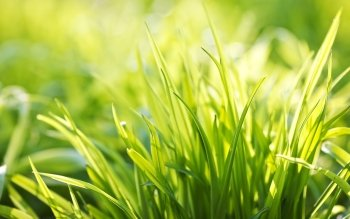 Earth - Grass Wallpapers and Backgrounds ID : 466444