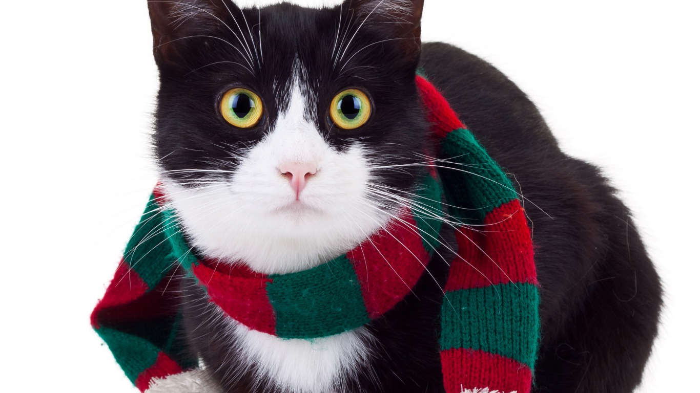 Christmas Cat Wallpaper And Background Image 1366x768 Id