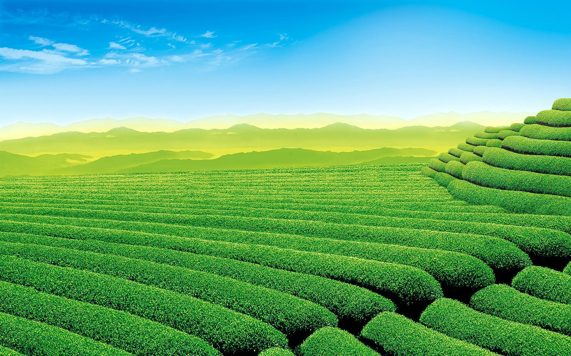 Nature Made Green Tea
