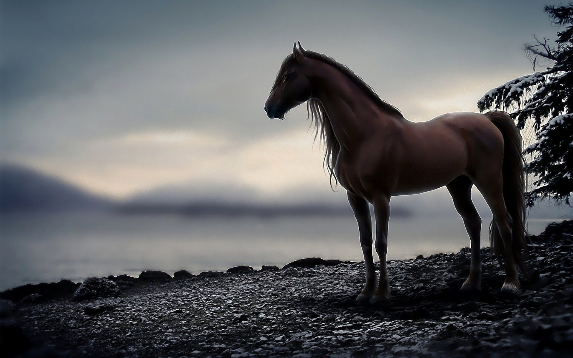 horse full hd wallpaper and background image | 1920x1200 | id:472763