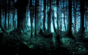 Fantasy - Forest Wallpapers and Backgrounds ID : 472599