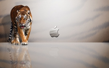 Technology - Apple Wallpapers and Backgrounds ID : 473823