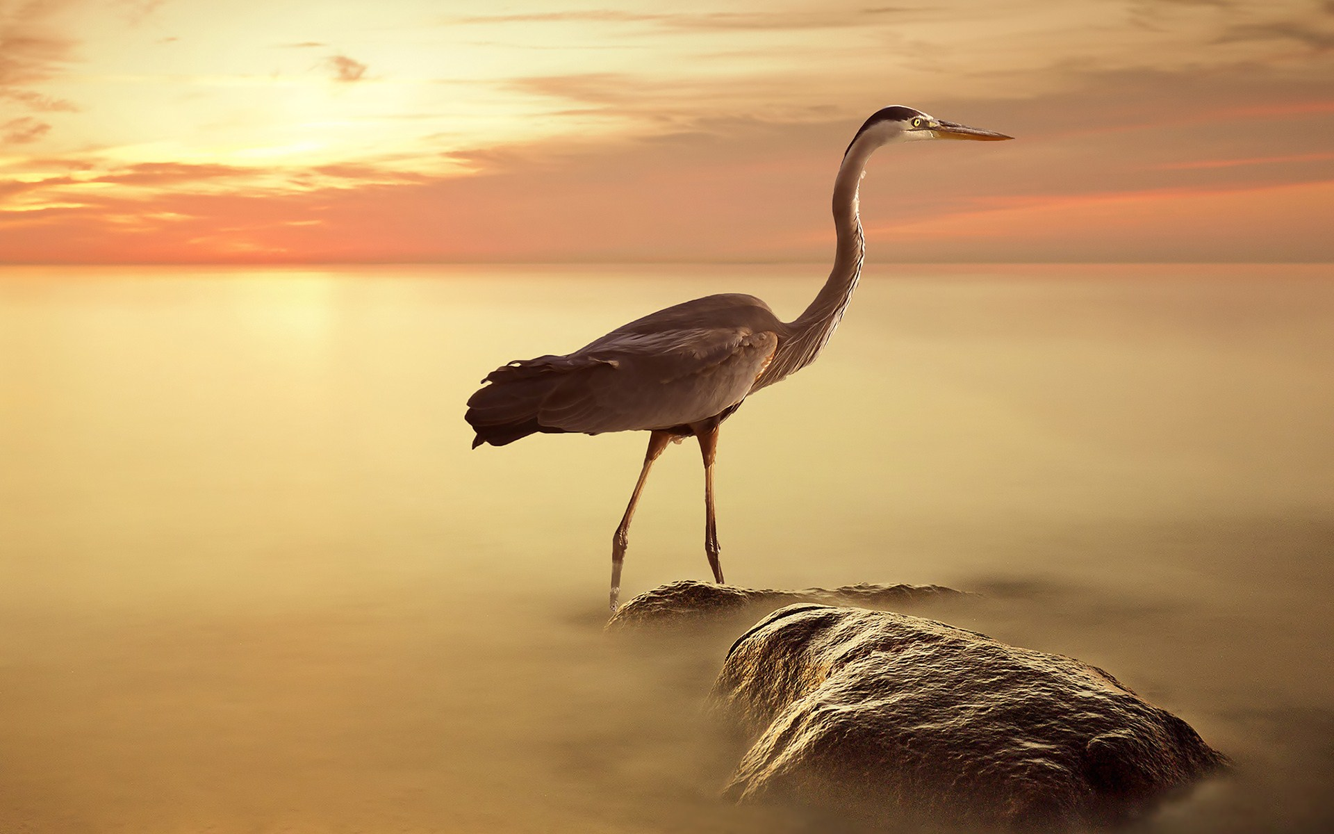 Hiron full hd wallpaper and background image 1920x1200 - Animal and bird hd wallpaper ...