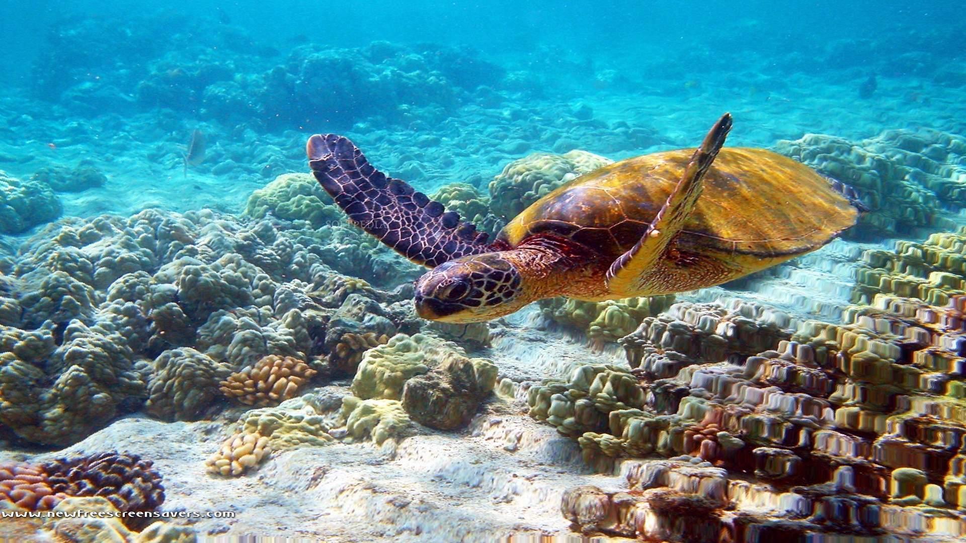 turtle HD Wallpaper   Hintergrund   1920x1080   ID:479435 ...