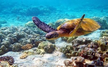 Animalia - Tortuga Wallpapers and Backgrounds ID : 479435