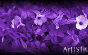 Aarde - Bloem Wallpapers and Backgrounds ID : 480452