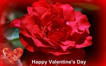 Holiday - Valentine's Day Wallpapers and Backgrounds ID : 482958