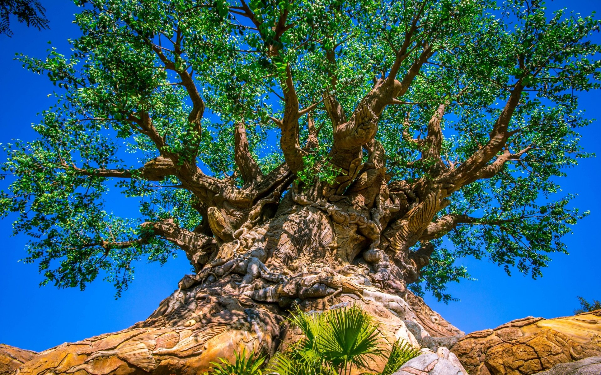 tree of life at disney 39 s animal kingdom full hd wallpaper and background image 1920x1200 id. Black Bedroom Furniture Sets. Home Design Ideas
