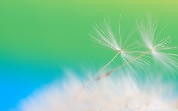 Earth - Dandelion Wallpapers and Backgrounds ID : 485235