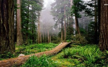 Earth - Forest Wallpapers and Backgrounds ID : 485698