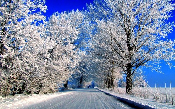 Earth Winter Snow Road Tree Frost HD Wallpaper | Background Image