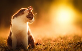 Animal - Cat Wallpapers and Backgrounds ID : 488654