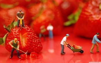 Alimento - Strawberry Wallpapers and Backgrounds ID : 489280