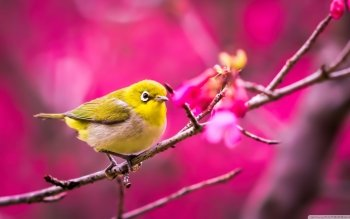 Animal - Bird Wallpapers and Backgrounds ID : 491863
