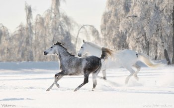 Animal - Horse Wallpapers and Backgrounds ID : 491940