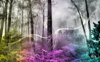 Fantasy - Forest Wallpapers and Backgrounds ID : 493569