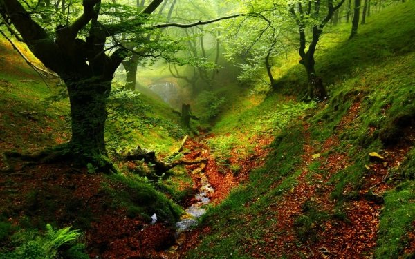 Earth Forest Creek HD Wallpaper | Background Image