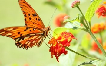 Animal - Butterfly Wallpapers and Backgrounds ID : 496393