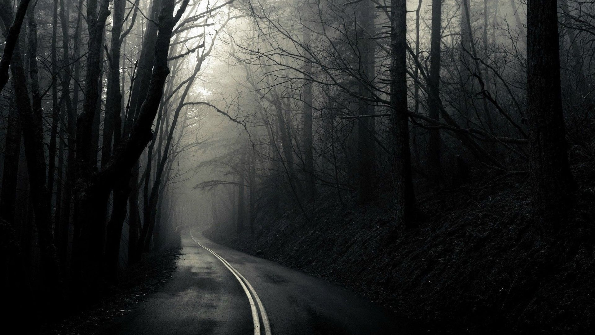 Road Through The Dark Woods HD Wallpaper