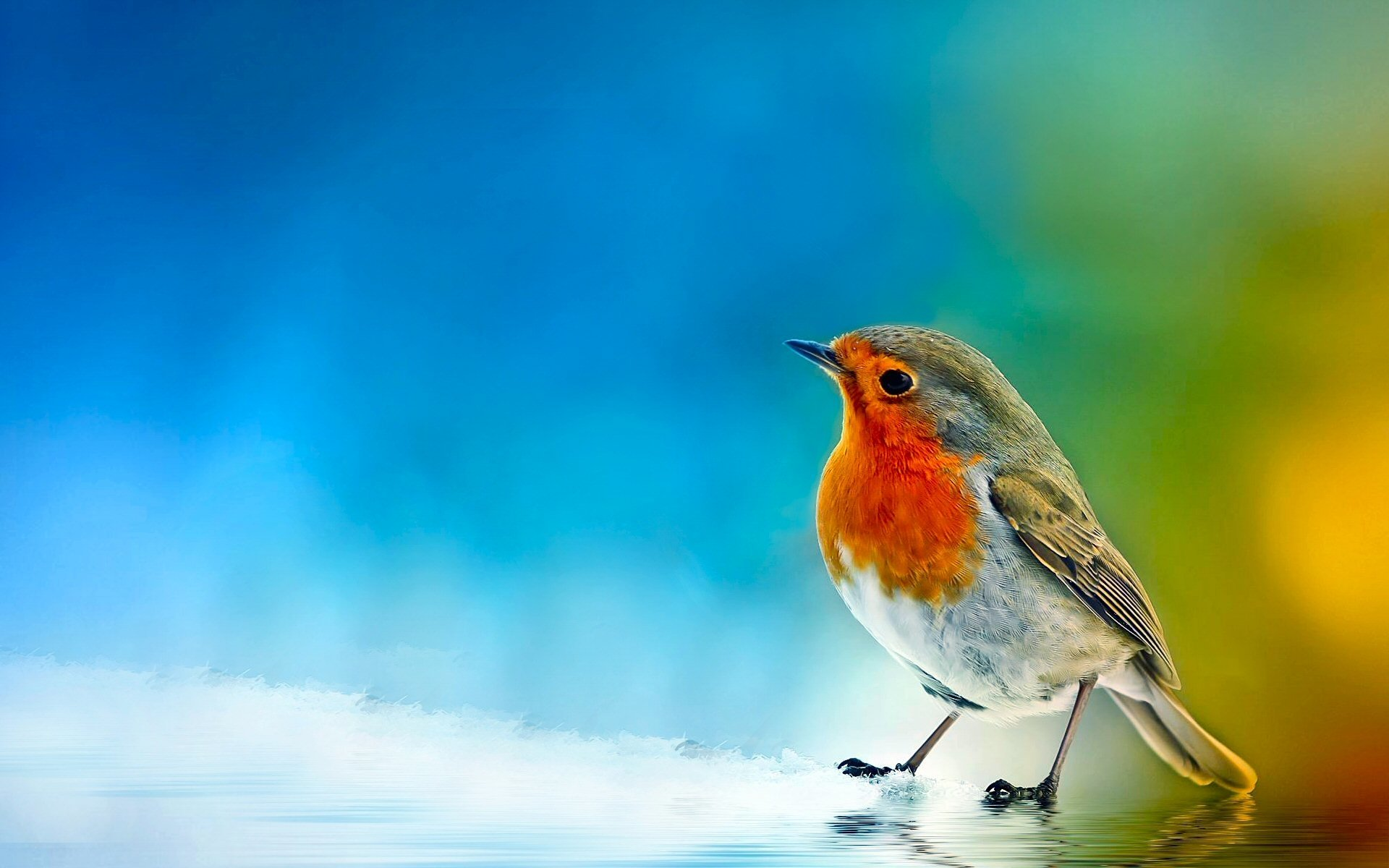 Bird Wallpaper Pleasing 1825 Bird Hd Wallpapers  Backgrounds  Wallpaper Abyss Inspiration