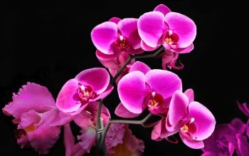 Earth - Orchid Wallpapers and Backgrounds ID : 499857