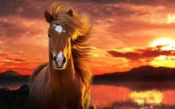 Animal - Horse Wallpapers and Backgrounds ID : 500507