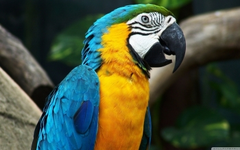 Animal - Macaw Wallpapers and Backgrounds ID : 501356