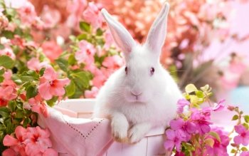 Holiday - Easter Wallpapers and Backgrounds ID : 502395
