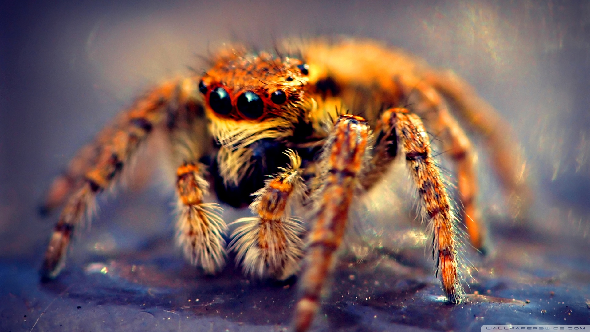 spider hd wallpaper | background image | 1920x1080 | id:504272