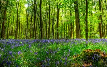 Earth - Forest Wallpapers and Backgrounds ID : 505522